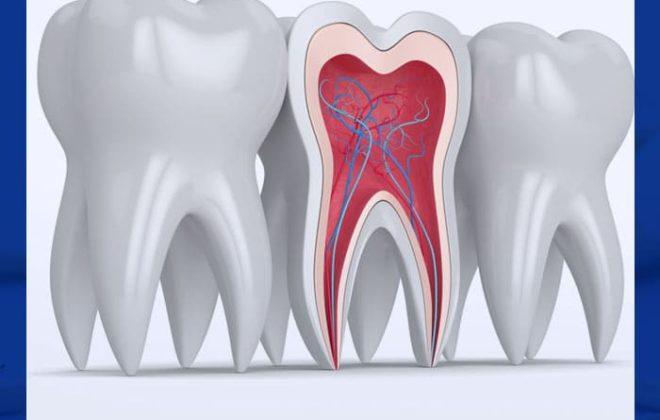 عصب الاسنان